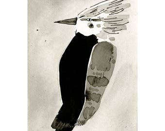 Woodpecker, black and white ink wash on paper