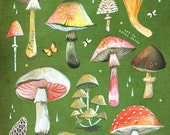 Mushroom Chart - on stretched canvas - Katie Daisy art
