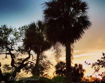 Photograph: Palm Trees at Dusk 4x6 Nature Photo Print
