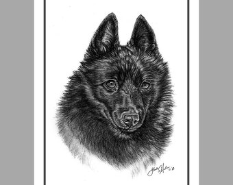 Schipperke Dog Fine Art Note Cards - EIGHT PACK