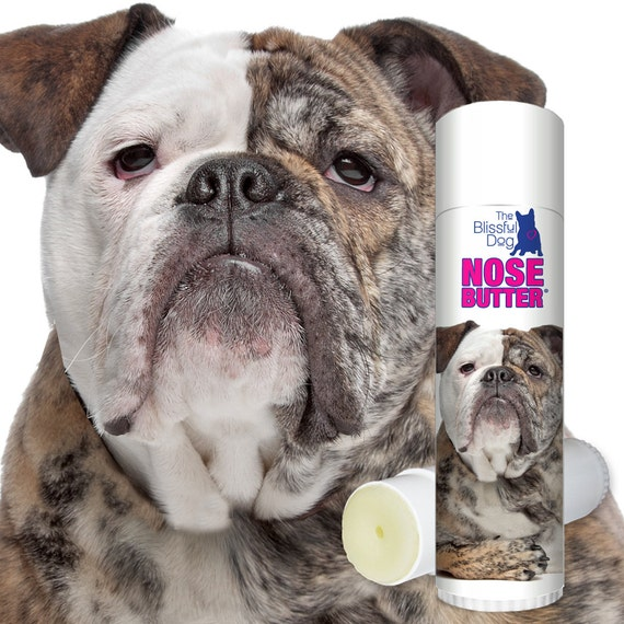 original english bulldog olde english bulldogge dog original nose butter 174 handcrafted 6574