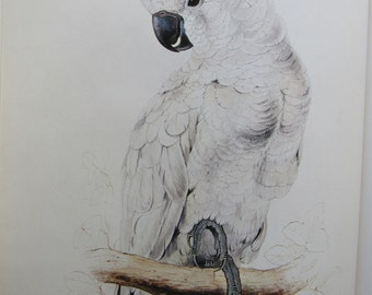 Edward Lear, Salmon-Crested Cockatoo, 10 x 14 in. Color Plate, 1980s Book Page, Unframed Print
