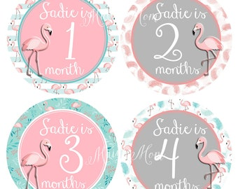 FREE GIFT, PERSONALIZED  Baby Girl Monthly Stickers, Baby Girl Month Stickers, Milestone Stickers, Flamingo, Photo Prop, Nursery Decor