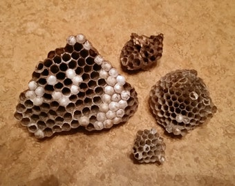 4 Bee Wasp Nests or Combs for Decorating Wreaths or Floral Arrangements
