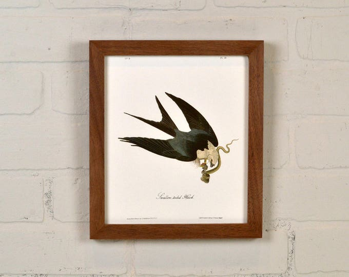 "Framed Audubon Bird Print ""Swallow Tailed Hawk"" Full Color Reproduction - Solid Natural Walnut Peewee Style - IN STOCK - Same Day Shipping"