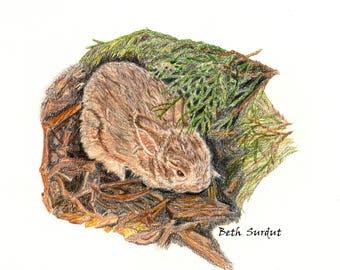 Desert bunny rabbit drawing