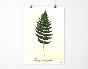 Marginal Wood Fern Botanic Specimen - Real Pressed Botanical Art