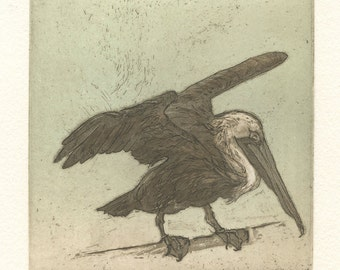 Brown Pelican, original aquatint etching, in brown and aqua