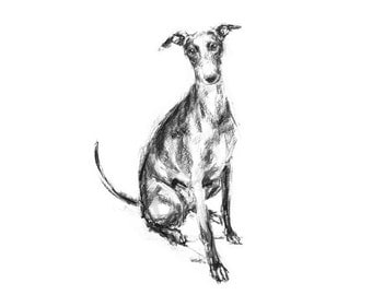 Watchful Whippet Sitting - fine art dog print