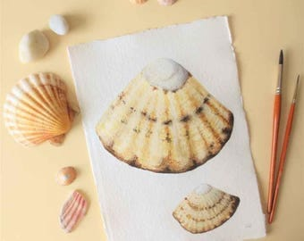 limpet sea shell original watercolour painting illustration coastal decor series beach style