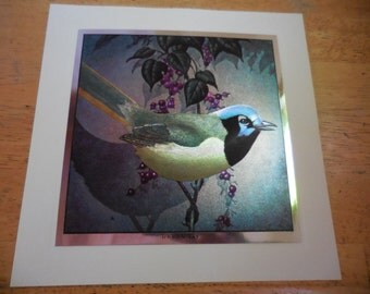 Vintage 1960s Green Jay Bird of America Color Etched Print by Tom Dolan Frameable Artwork Square Silver Trim Colorful Blue/Green/Purple