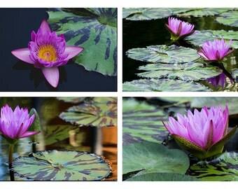 Waterlily Photography, Waterlily Prints, Nature Photography, Waterlily Photo, Wall Gallery Four Photos Waterlily Wall Art Decor, Lotus Print