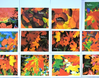 Burst of wild Colors of Fall Popping Everywhere - Notecards