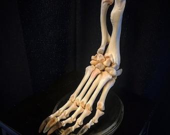 Foot of Unknown Origin