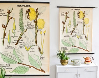 Sallow botanical print, educational pull down chart, pussy willow poster, plant educational chart German