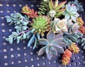 20 SUCCULENT CUTTINGS, Succulent plants, Succulent Terrarium, Succulent Centerpiece, Colorful Succulents, Succulentt Cuttings, Centerpiece