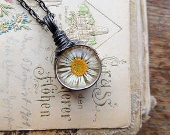 Wish Necklace, daisy necklace, terrarium necklace, botanical ,natural specimen ,real plant jewelry