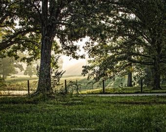 Morning Light Landscape Photograph, Light Beams through the Fog, Morning Scene Fine Art Print or Canvas Wrap