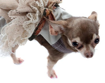 Rag Muffin Mocha Small Dog Harness Precious Shabby Chic Lace Skirt Floral Dress Girl Dog