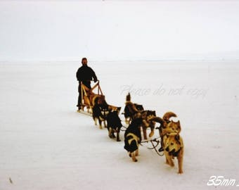 Kodachrome 35mm slide ~ Antarctic dog sled team ~ abstract view