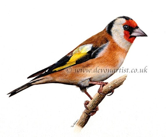 Original Watercolour Painting, Goldfinch, Bird Art, Watercolor Birds, Finch, Wildlife Illustration