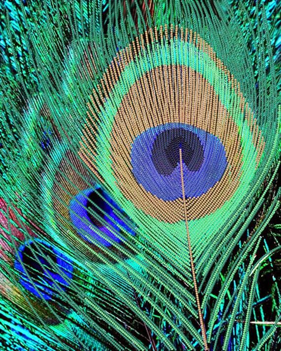 Peacock Feather DIY bead embroidery kit, wall art decor, housewarming gift idea, craft kit, beaded painting set