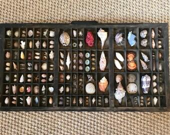Vintage Printers Tray Seashell Study