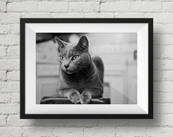 Cat Photo, Gray Cat Picture, Black and White Fine Art Photography, Grey Cat, Animal Photo, Cat Lover Print, Cat Eyes, Nature Photo