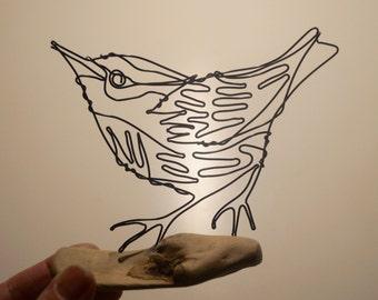 A Nuthatch bird