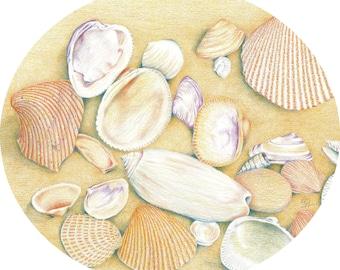 Seashells on the beach print 2  / Seashell drawing / Seashell art / Colored pencil drawing of seashells on the beach