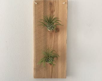 Double Airplant Holder