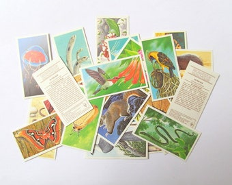 Incredible Creatures Brooke Bond tea cards: pack of 29 collector cards from 1986. Vintage ephemera for scrapbooks, collage, journal OT547
