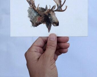 Moose - (Print)
