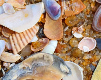 Sandbridge Beach Instant Photo Download, Insta-Photo, Macro Photography, Atlantic, Summer, Cool, Shells, Sand, Close-Up, Seashells, Virginia