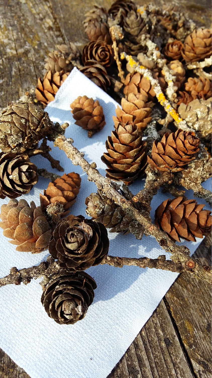 Larch cones small pinecones w moss twigs branches natural for Rustic home decor suppliers