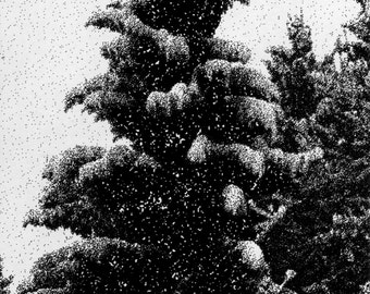 Black Snowy Tree Postcard