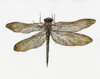 Watercolor original detailed painting of dragonfly