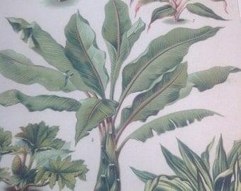 "Chromolithograph ""Sheet plants"""