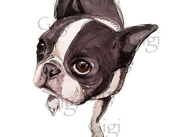 Boston Terrier Print, Boston Terrier Drawing, Boston Terrier Art Print, Dog Print , Dog Portrait, Dog illustration, Dog drawing #2
