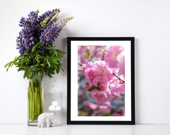 Pink cherry blossoms fine art print, printable art prints, fine art printable art, photo print, digital download, flowers,