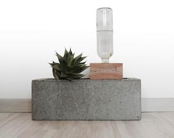 Self watering concrete planter.