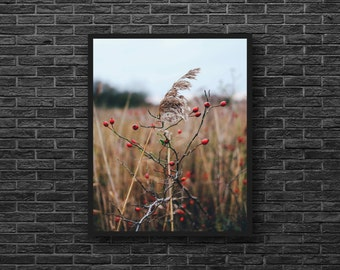 Autumn Field Photography - Field Print - Rural Photo - Fields Photo - Autumn Nature - Fall - Botanical Print - Vertical - Rural Wall Decor