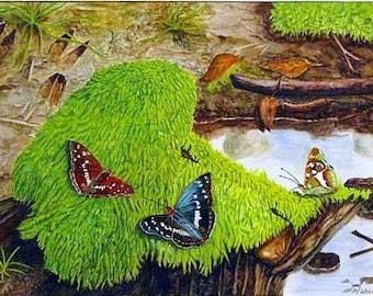 Fine art painting, watercolor, Butterflies, purple Emperor