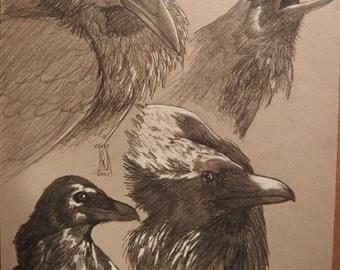 Raven studies, ravens, raven, corvid, corvid study, corvids, original art, nature, animal art, print