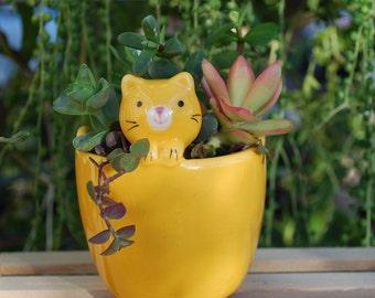 Cute Cat Planter with live Succulents