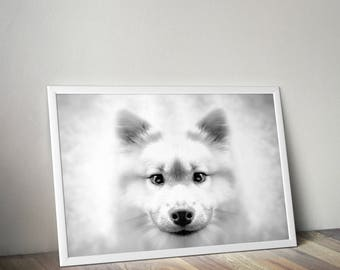 White Dog print, black & white animal photography, Samoyed puppy photo, bedroom wall art, nursery decor, 8x12 print, dog lover gift