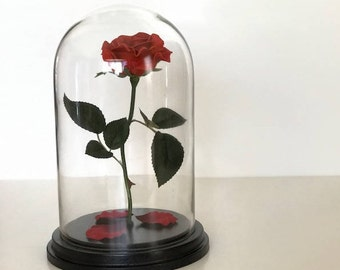 Beauty and the Beast Rose, Forever Rose, Enchanted Rose, Flower Gift, Rose in Glass Dome, Live Forever Rose, Eternal Rose