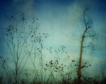 Dark Blue Wall Art - Nature Photography - Abstract Art - Fine Art Photograph - Original Art - Moody Dark Art - Botanical Print - Floral Art
