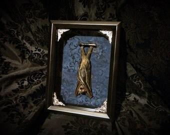 Blue Taxidermy Bat Shadowbox - Real Bat - Gothic Gift - Bat Gift - Gothic Decor - Halloween Decor - Bat Decoration