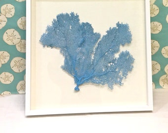 Beach Decor - Framed Natural Sea Fan on Linen - coral, coastal, nautical, seashells, starfish sealife